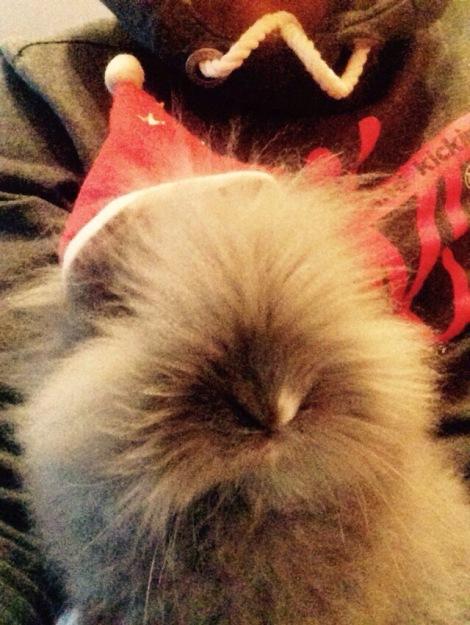 Weihnachten mit Wuschel / Christmas with my rabbit